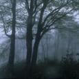 ブナ林霧景